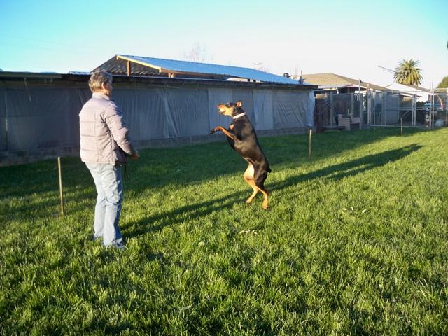 Roxy Jumping for Joy