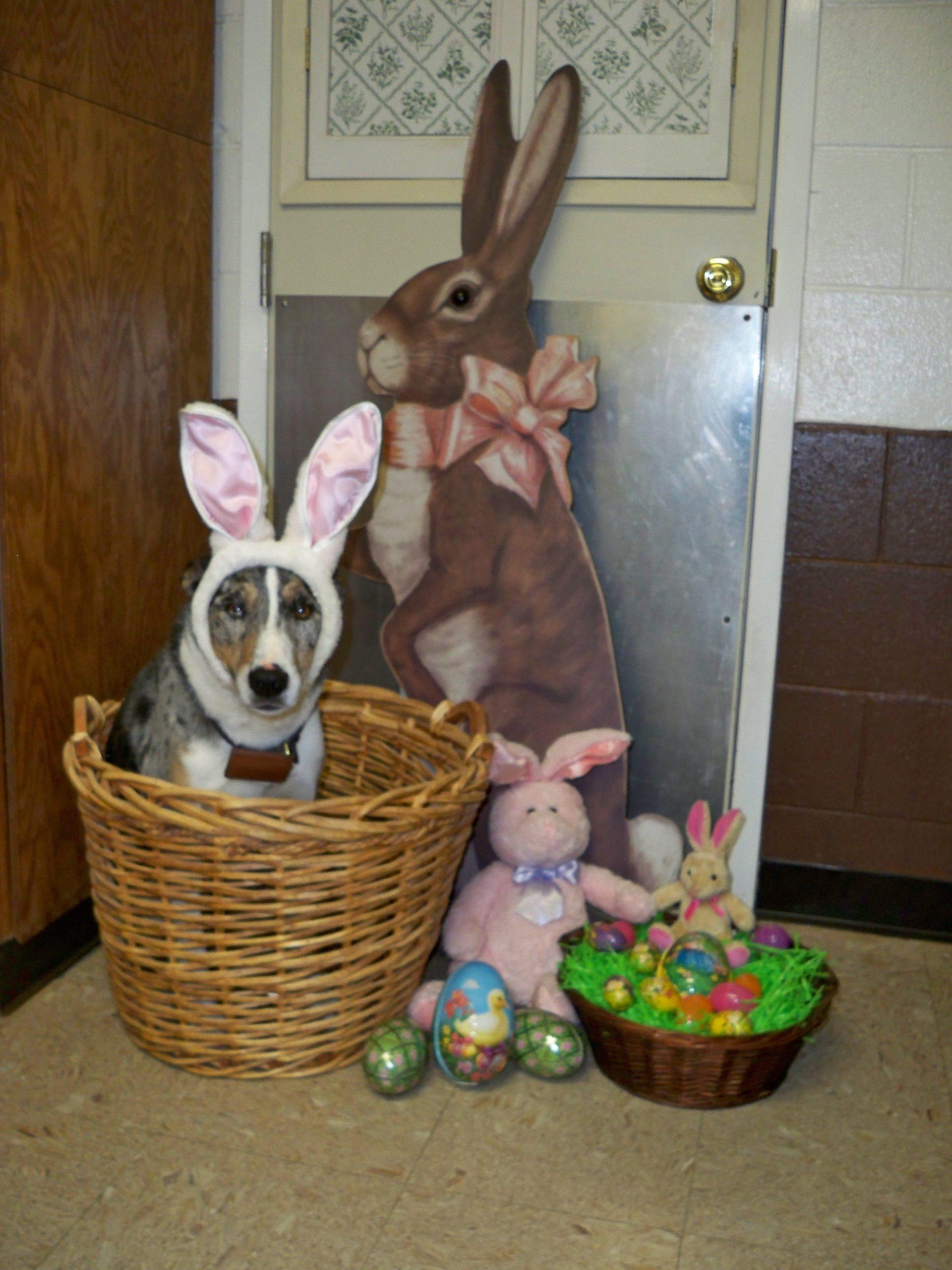 Finn waits for the Easter Bunny