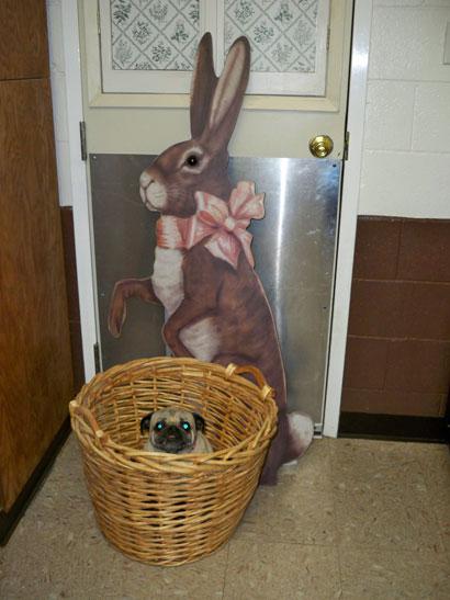 Murphy hunts for Easter Eggs