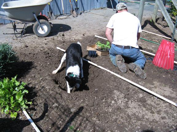Skye helps in the garden