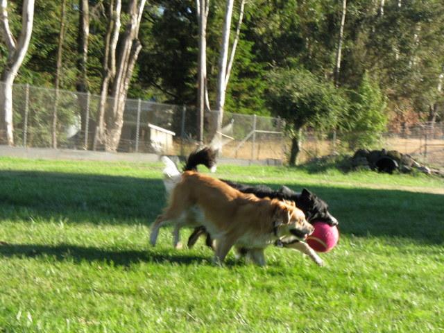 Sadie and Craig at Play