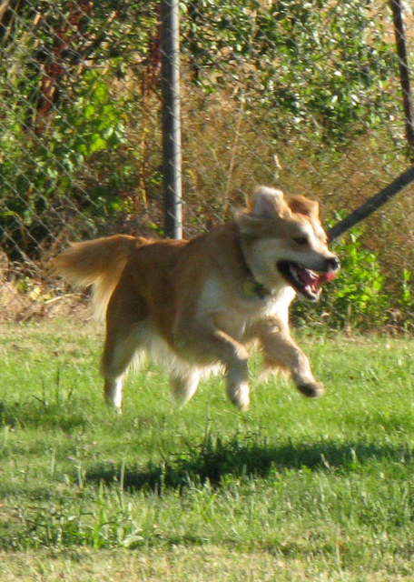 Sadie Flying...
