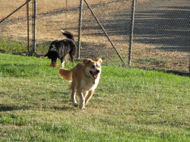 Sadie Running Away...