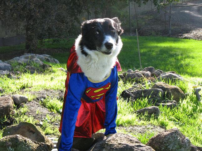 Skye, the Super Dog