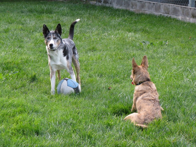 Finnegan and Lucy Play Ball