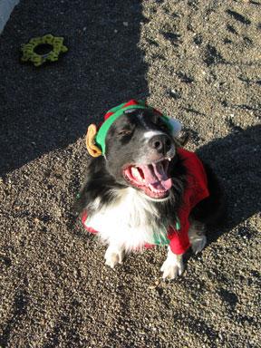 Craig, the happy Christmas Elf