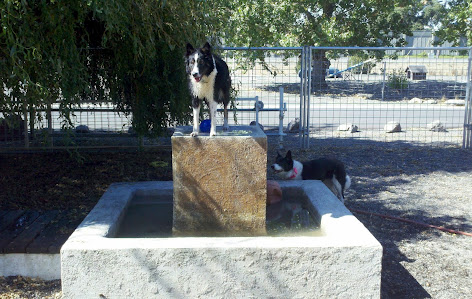 Holly, Queen of the Water Fountain